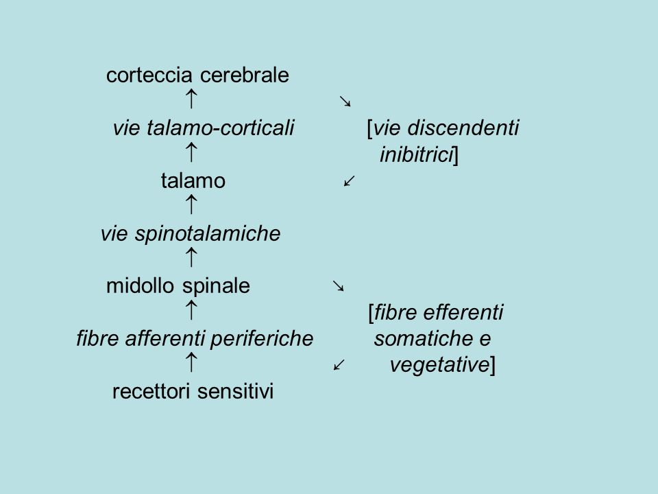 corteccia cerebrale  ↘ vie talamo-corticali [vie discendenti  inibitrici] talamo ↙  vie spinotalamiche  midollo spinale ↘  [fibre efferenti fibre afferenti periferiche somatiche e  ↙ vegetative] recettori sensitivi